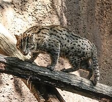 Fluffy Fishing Cat by cute-wildlife