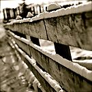 Snow Covered Fence by Roxanne Persson