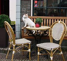 Café Cat by Alison Netsel