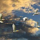 Heading for the Roost by byronbackyard