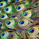 Peacock Feathers by Heath Carney