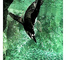 Watercolour Penguin Photographic Print