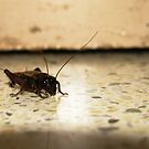 Cricket by Akash Puthraya