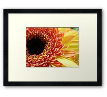 Multi-colored Gerbera Daisy Framed Print