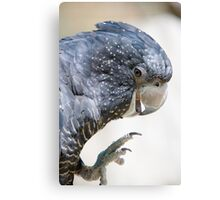Red Tailed Black Cockatoo Canvas Print