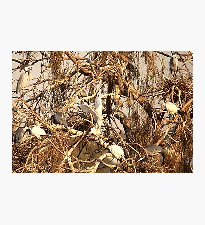 Winter willow Photographic Print