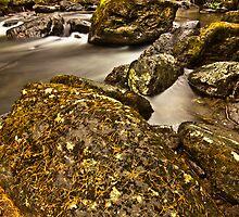 Ardgartan Forrest Argyll in autumn by Andrew Littlejohn