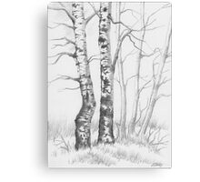 BIRCH TREE 01 Canvas Print