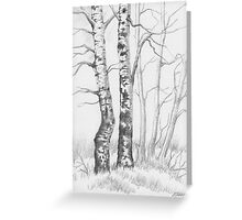 BIRCH TREE 01 Greeting Card