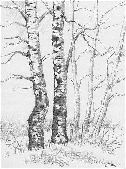BIRCH TREE 01 by RainbowArt