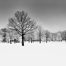 Winter Blues bw by martinilogic