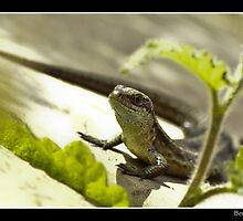 Sunlounging Lizard by Ben  Warren