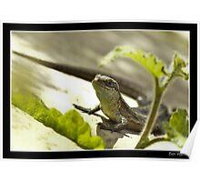 Sunlounging Lizard Poster