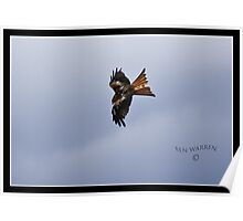 Red Kite Inflight Poster