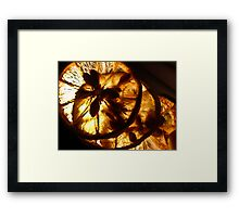 Dried Beauty Framed Print