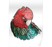 Sleeping Macaw Poster