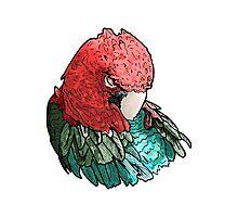 Sleeping Macaw Photographic Print