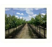 Summertime In A Vineyard Art Print