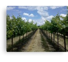 Summertime In A Vineyard Canvas Print