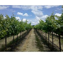 Summertime In A Vineyard Photographic Print