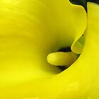 Yellow Arum Lily Close-up by RuthMoore