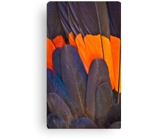 Red Tailed Black Cockatoo Feathers Canvas Print