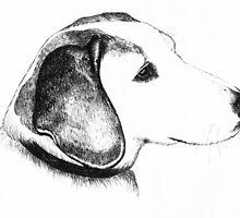 Beagle dog by mindgoop