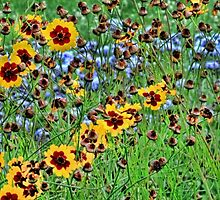 Tickseed Coreopsis by T.J. Martin