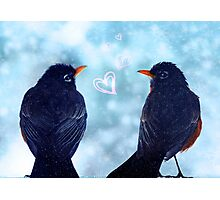 Young Robins in Love Photographic Print