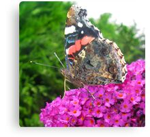 Butterfly on Purple Buddleia Canvas Print