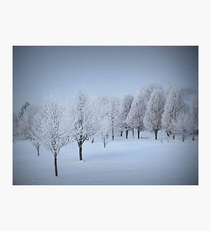 One More Fosted Tree Scene Photographic Print