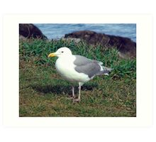 Seagull (4) Art Print