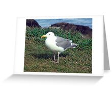 Seagull (4) Greeting Card