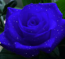 Bejewelled Blue Rose by ElsT