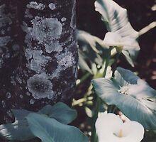 Coffee tree bark by Betty Smith_Voce