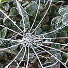 Frozen Web by Renfield286