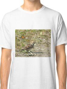 Lapland Longspur Classic T-Shirt