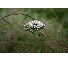 Irish Wild Flower Photographic Print