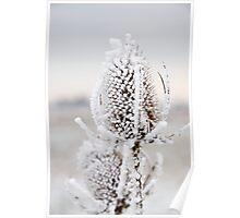 Frozen Teasel Poster