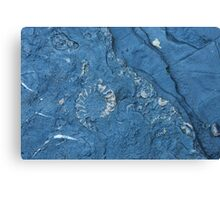 Fossil Assemblage Canvas Print