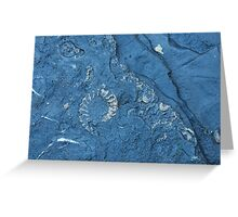 Fossil Assemblage Greeting Card