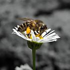 Busy Bee by Steven  Agius
