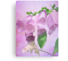Fancy Foxglove Canvas Print