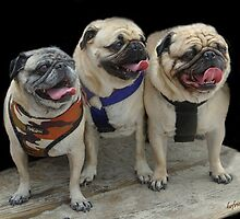 Three Little Pugs! by heatherfriedman