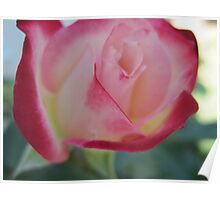 vanille cherry dip rose Poster