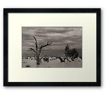 Menindee Trees Framed Print