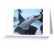 Sting Ray Greeting Card