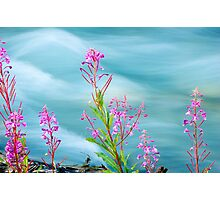 Fireweed and Stream Photographic Print