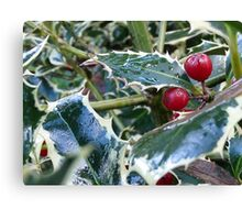 holly leaves Canvas Print