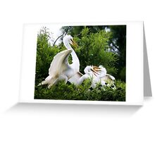 Great White Egret with Babies Greeting Card
